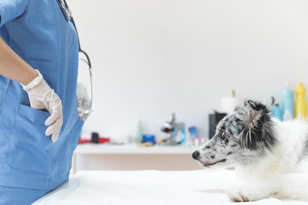 Tumores intracraneales en perros: ¿Hay esperanza?